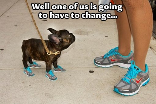 funny-dog-miniature-shoes-runners